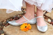 Free Bridal Shoes Stock Photography - 8897992