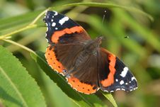 Free Butterfly On Leaves Stock Photography - 8898372