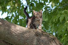 Free The Cat Stock Images - 8898854