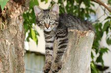 Free Tabby Kitten Stock Photography - 8898892