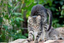Free The Tabby Cat Stock Photo - 8899140