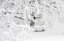 Free Snow Covered Bench Near Snow Covered Bare Tree Stock Photo - 88982200