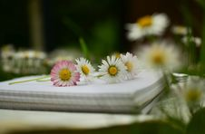 Free Daisies Placed On A Notebook Royalty Free Stock Photography - 88984487