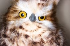 Free Close Up Photography Of Brown White Owl Royalty Free Stock Images - 88985379