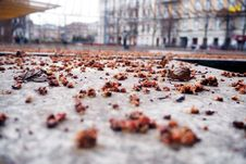 Free Autumn Leaves On City Streets Stock Photo - 88986570