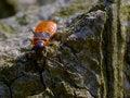 Free Milkweed Bug Baby Stock Photo - 890850