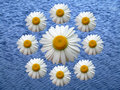 Free Wreath Of Chamomile Blue Royalty Free Stock Photos - 890968