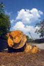 Free Drop Timbler Stock Photos - 894023