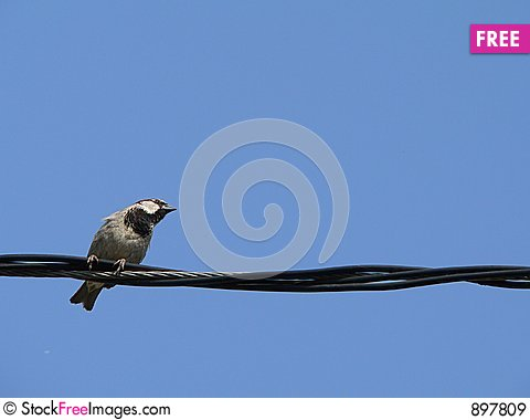 Free Little Bird With Blue Sky 2 Royalty Free Stock Images - 897809