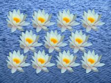 Free Bunch Of Water Lily Stock Photos - 890813