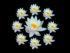 Free Coronal Of Water Lily Stock Photo - 890840