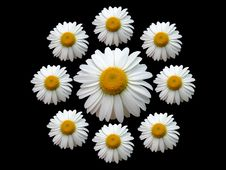 Free Wreath Of Chamomile Black Stock Images - 890954