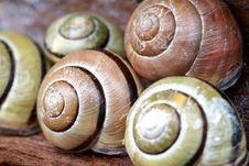 Free Snails Stock Photos - 892243