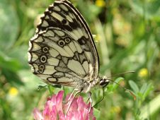 Free Butterfly Stock Image - 893231