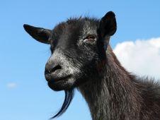 Free Goat Head Stock Photo - 894680