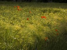 Free Summer Meadow Royalty Free Stock Photo - 895135
