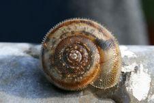 Free Snail S Shell Royalty Free Stock Photos - 895708