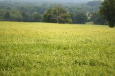 Free Field Of Barley Stock Photos - 897223