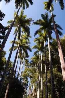 Free Palm Trees Stock Image - 897701