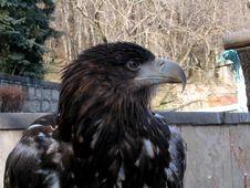Free Proud Bird Stock Photos - 897723