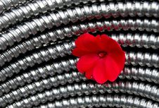 Free Steel And Flower Royalty Free Stock Photography - 898307