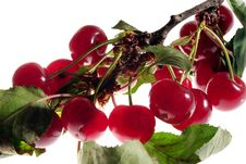Free Cherry On Branch Stock Image - 898531