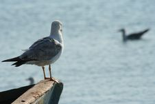 Free Seagull On A Boat Royalty Free Stock Photos - 898548