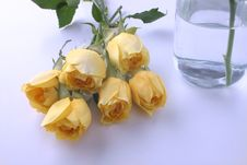 Free Framed Yellow Rose And Water Bottle Stock Image - 898721