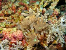 Free Soft Coral Stock Image - 898861