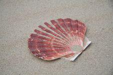 Free Seashell Stock Photo - 899440