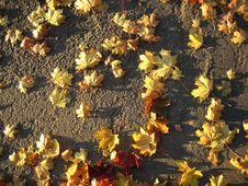 Free Fall Foliage. Royalty Free Stock Image - 899916