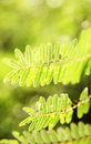 Free Green Leaves Stock Photo - 8906440