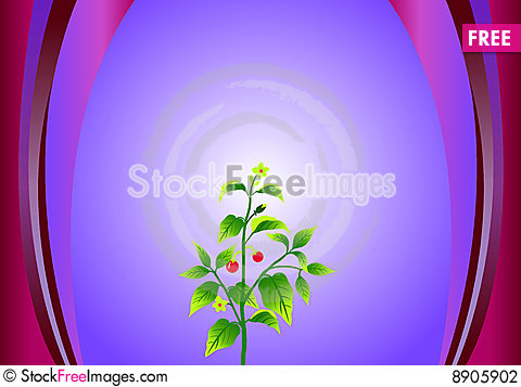 Free Plant Stock Photography - 8905902