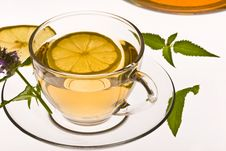 Free Herbal Tea Royalty Free Stock Image - 8900196
