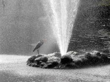 Free Heron Under Shower. Stock Photography - 8900502