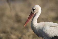 Free Stork Stock Photo - 8901040