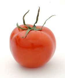 Free Red Tomato Royalty Free Stock Photos - 8901908