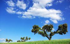 Free Landscape Of Alentejo Region. Stock Photos - 8904163