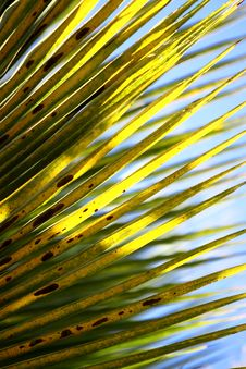 Free Coconut Leaves Stock Photography - 8905572