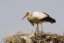 Free Stork In Morocco Stock Photos - 8907563