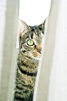 Free Cat Stalking Stock Images - 8908554