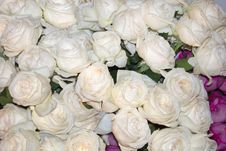 Free Bed Of White Roses Stock Photos - 8908573