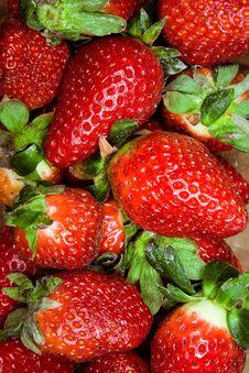 Free Fresh Strawberries Stock Photo - 8908720