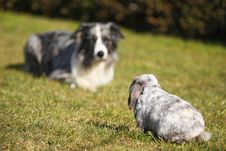 Free Dog And Rabbit, Head To Head Royalty Free Stock Photos - 8909798