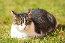 Free Cat With Devilish Look Stock Photography - 8909802