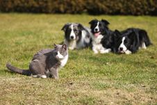 Free Three Dogs Gazing Into A Cat Royalty Free Stock Images - 8909819