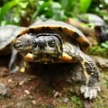Free Curious Turtle Stock Photo - 8912010