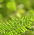 Free Green Leaves Royalty Free Stock Images - 8912929
