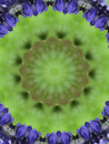 Free Flower Kaleidoscope Stock Image - 8916831