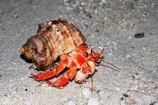 Free Maldivian Sand Crab Stock Photos - 8913233